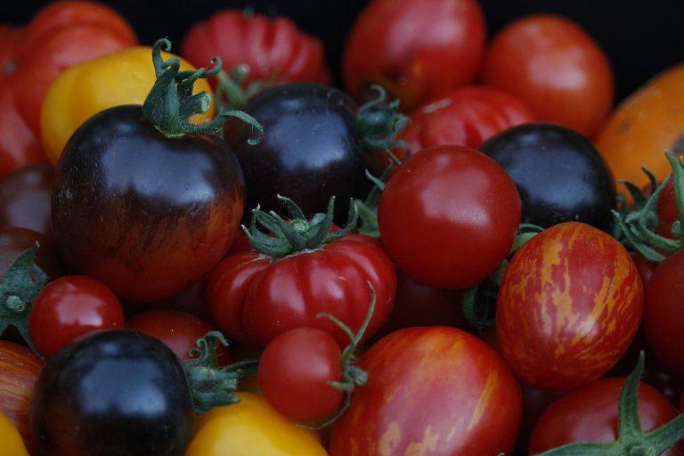 Tomaatilla saa väriä ruokiin. Kuva: Teija Kirkkala