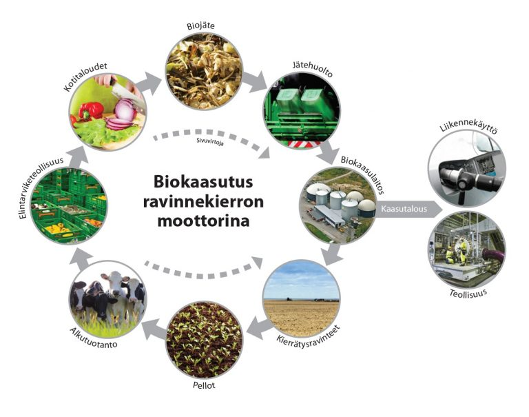Yksi esimerkki ravinteiden kierrättämisen ketjusta. Tässä kierrättämisen moottorina toimiin biokaasulaitos.