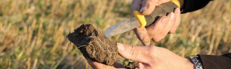 Onhan lounaissuomalaisella maataloudella tulevaisuutta?