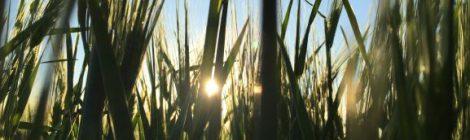 Ilmastonmuutos ja maanviljely - Osa 1, Vesi väärään aikaan