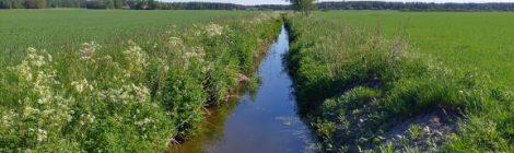 Maatalouden vesiensuojelutoimenpiteet kuivatusaluetasolla – case rakennekalkki